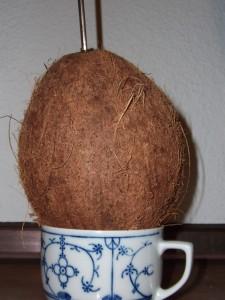 kokosnusshausundfressnapf_trinken1