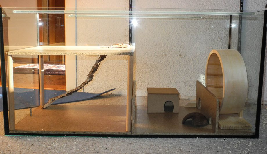 Rennmaus-Terrarium: So sollte ein Terrarium für Rennmäuse aussehen